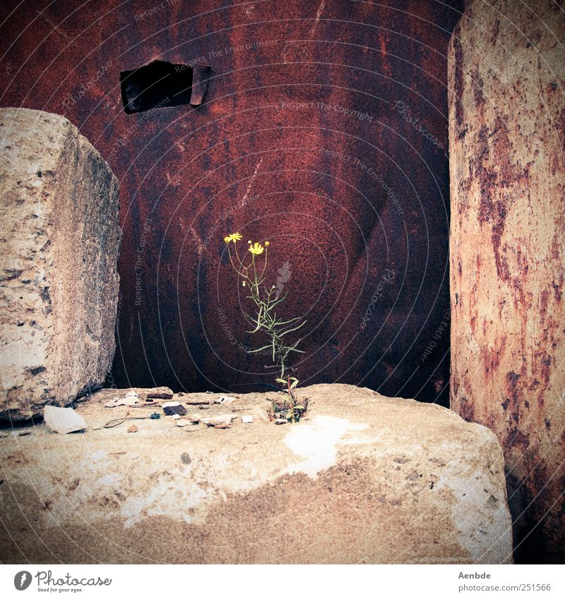 The hermit's little flower Plant Flower Rust Stone Loneliness Old Colour photo Exterior shot Day