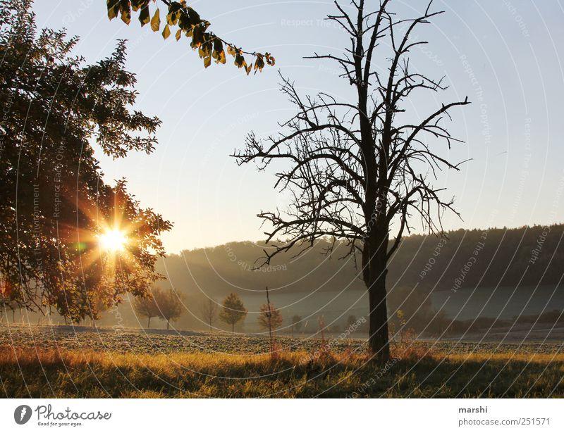 Sky Nature Tree Plant Sun Autumn Landscape Fresh Climate Bushes Branch Seasons