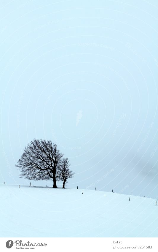 [User meeting year 2010] Environment Nature Sky Winter Climate Weather Wind Gale Fog Ice Frost Snow Plant chill Blue Black Moody Calm tree Tilt Schauinsland