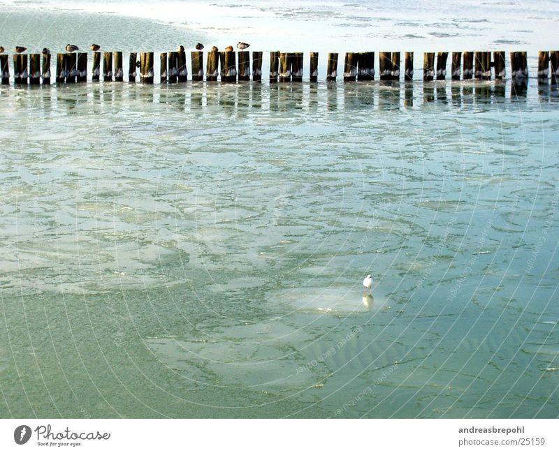 Water Winter Cold Ice Bird Coast Frost Frozen Baltic Sea Seagull Real estate Break water Ice floe