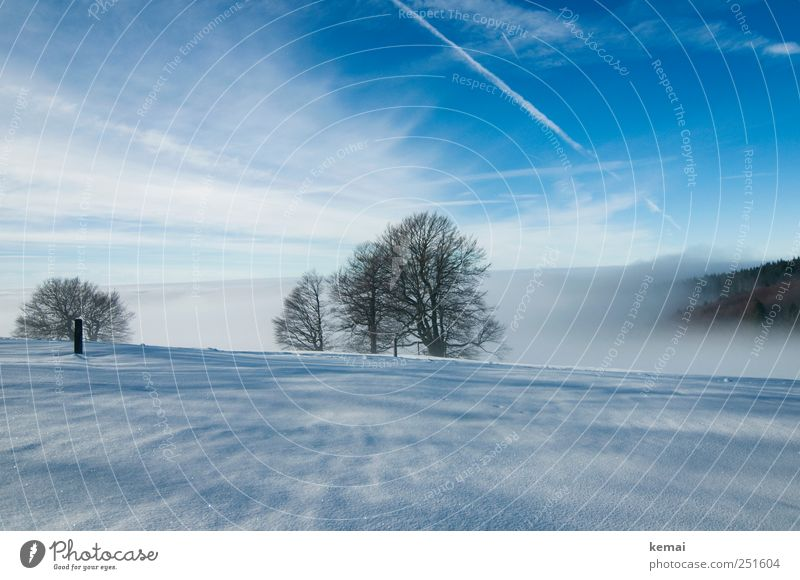 plane fog Environment Nature Landscape Plant Sky Clouds Winter Weather Beautiful weather Fog Ice Frost Snow Tree Beech tree Cold Blue White Loneliness