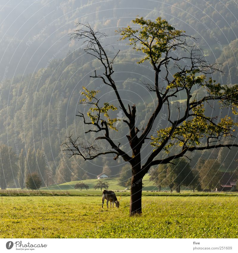 Nature Old Tree Plant Leaf Meadow Autumn Environment Landscape Emotions Grass Moody Field Large Hill Branch