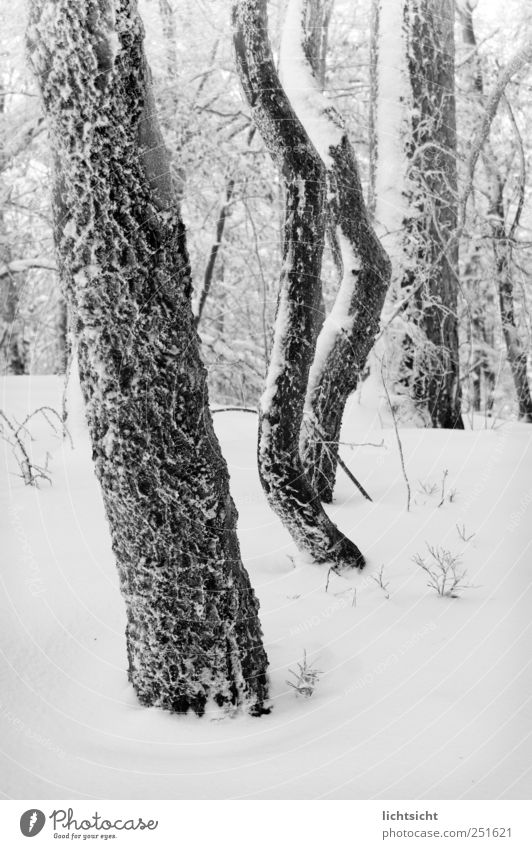 Nature Tree Winter Forest Cold Snow Landscape Weather Ice Climate Frost Frozen Tree trunk Branchage Hoar frost Deep snow
