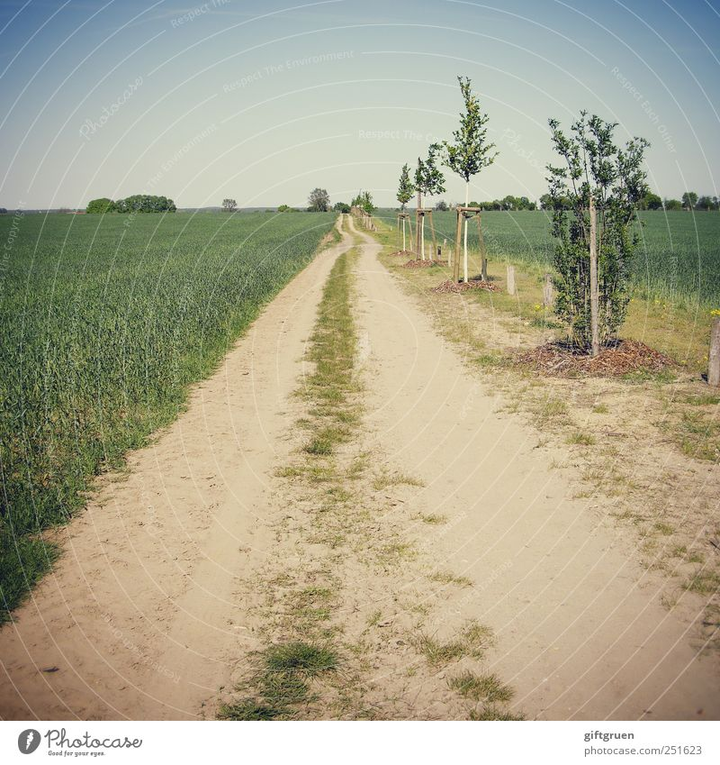 perspectives Environment Nature Landscape Plant Elements Earth Sky Cloudless sky Beautiful weather Meadow Field Growth Tree Row of trees Lanes & trails