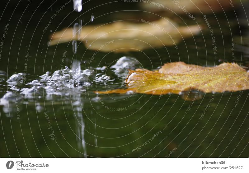 Nature Water Leaf Autumn Moody Wet Drops of water Natural Round Exceptional Well Air bubble Flow Inject Autumn leaves