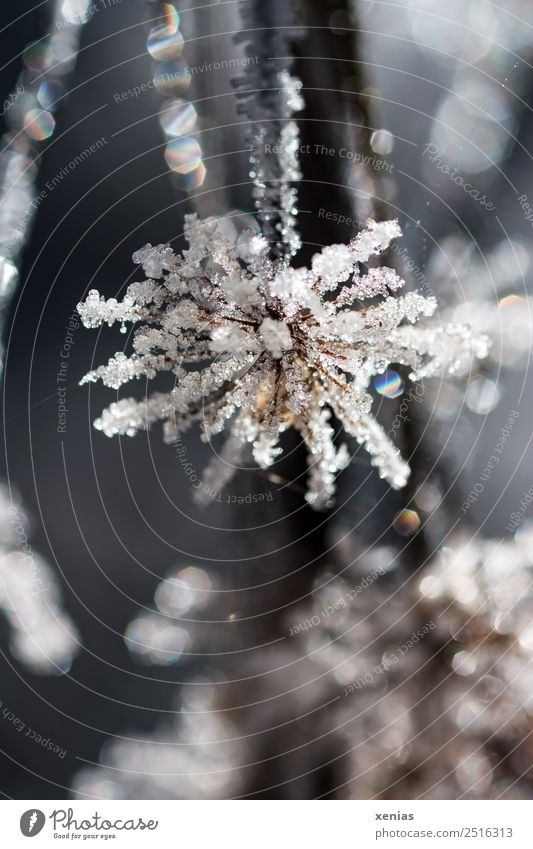 frost work Nature Animal Winter Ice Frost Plant Flower Freeze Cold Brown Black White Glittering Frozen Colour photo Subdued colour Exterior shot Close-up Detail