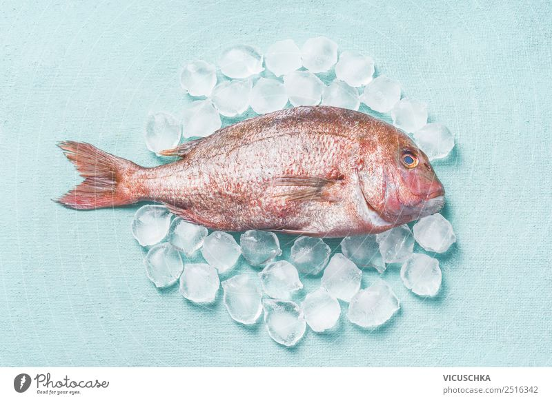 Pink Dorado Fish raw on ice cubes Food Nutrition Diet Style Design Healthy Eating Restaurant Raw Ice cube on blue Food photograph Colour photo Studio shot