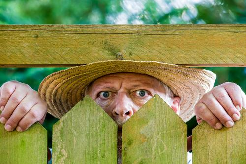 a curious neighbour looks over a garden fence Human being Masculine Man Adults Male senior Face 1 60 years and older Senior citizen Observe Curiosity Mistrust
