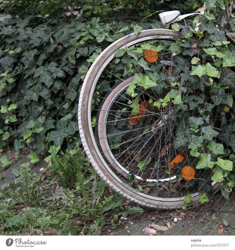 Nature Green Plant Environment Bicycle Stand Wheel Hide Parking Ivy Rest Overgrown