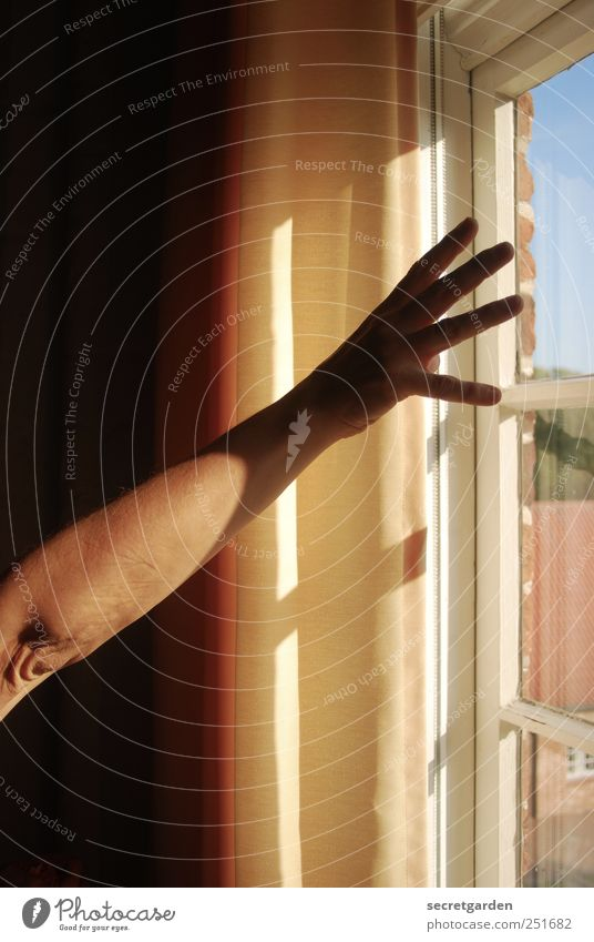 to reach for the sun. Flat (apartment) Room Woman Adults Skin Arm Hand Fingers 1 Human being Window Wood Glass Touch Dark Yellow Black White Emotions Euphoria