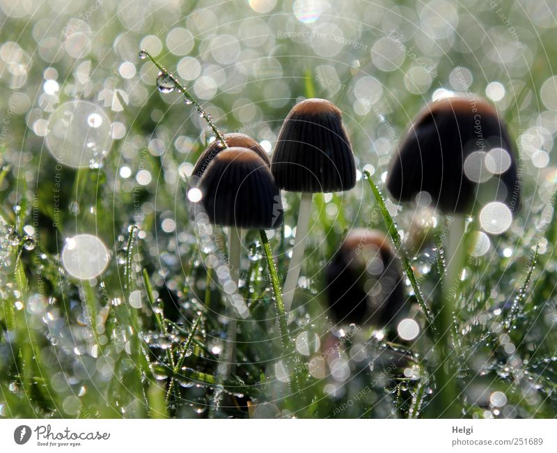 glittery world Environment Nature Plant Drops of water Autumn Beautiful weather Fog Grass Foliage plant Wild plant Mushroom Garden Meadow Glittering Illuminate