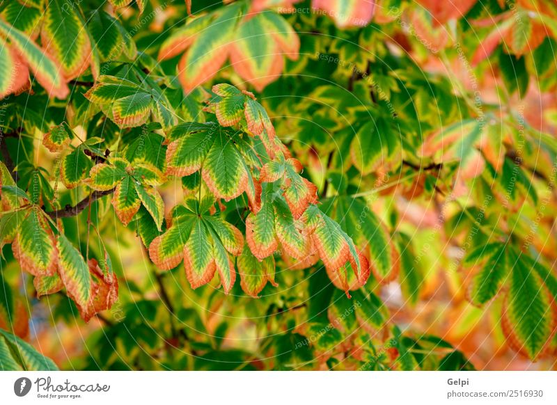 Leaves at autumn are becoming yellow Beautiful Sun Garden Environment Nature Landscape Plant Autumn Tree Leaf Park Forest Bright Natural Brown Yellow Gold Green