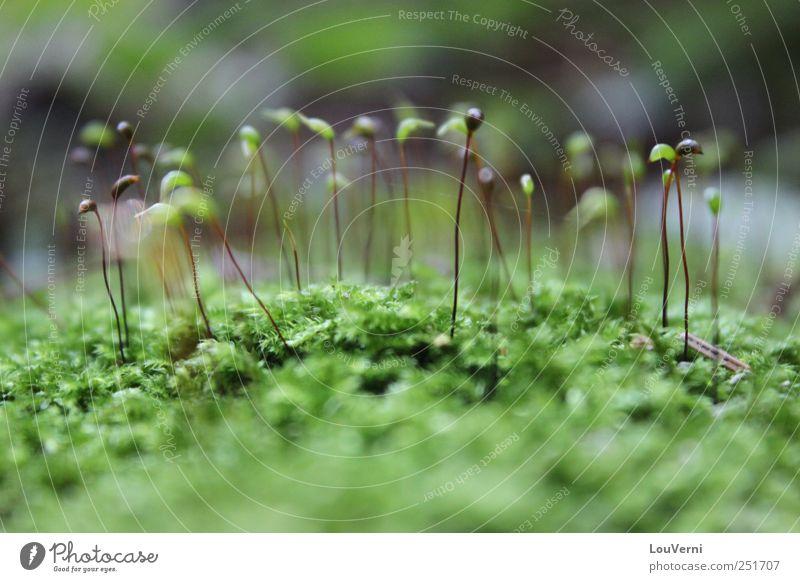 Nature Plant Green Summer Animal Autumn Idyll Cute Moss Inspiration Sympathy Foliage plant Wild plant