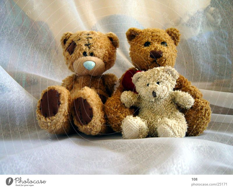 Only people Teddy bear Family & Relations Peace Harmonious Joy photo session Multiple Sit Together Looking into the camera 3