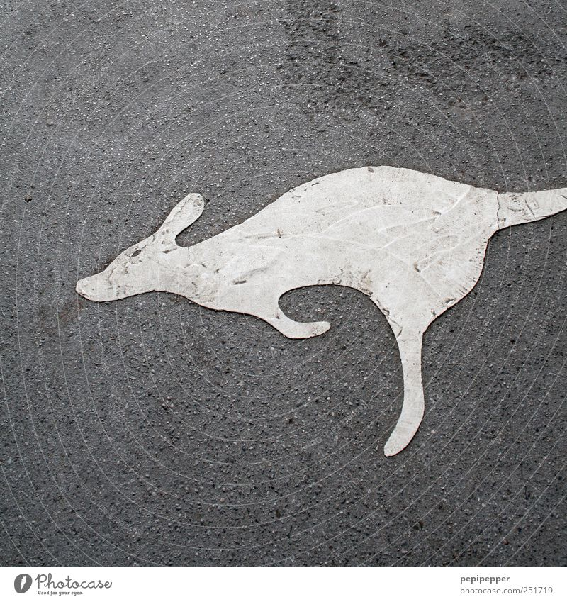 Animal Gray Jump Stone Earth Dirty Walking Tourism Wild animal Signage Asphalt Zoo Painting and drawing (object) Warning sign
