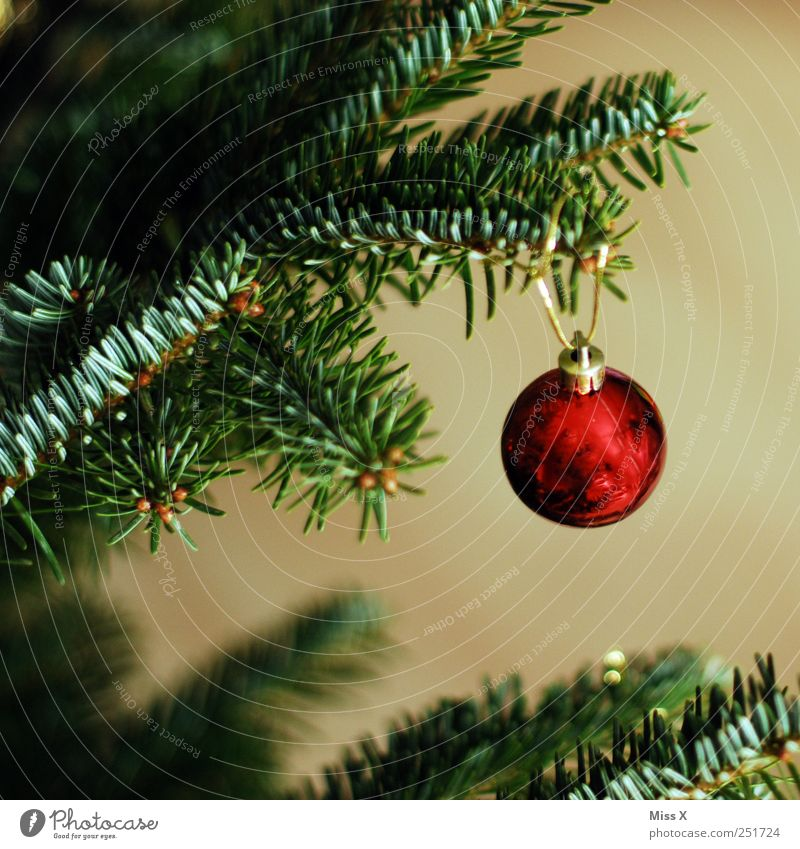 a small Glittering Round Red Glitter Ball Fir branch Christmas tree Christmas decoration Decoration Fir needle Gold Colour photo Multicoloured Close-up Deserted