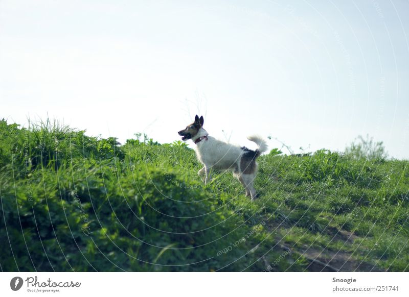 Come play! Environment Nature Earth Sky Cloudless sky Sunlight Grass Meadow Hill Animal Dog 1 Hunting Playing Green Colour photo Exterior shot Deserted