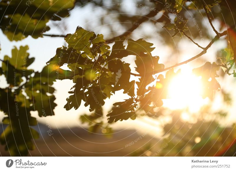 Nature Green Tree Sun Relaxation Loneliness Leaf Far-off places Environment Yellow Autumn Natural Bright Horizon Dream Park