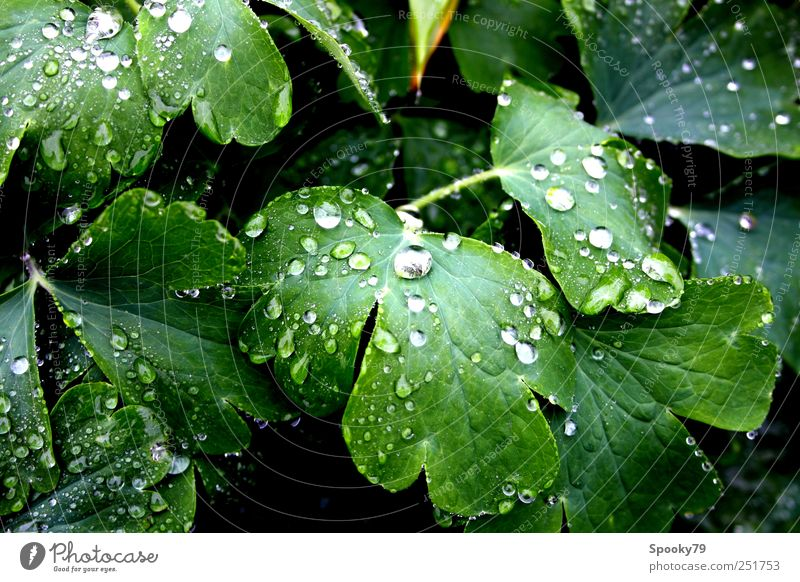 Green Plant Leaf Rain Weather Wet Drops of water Foliage plant