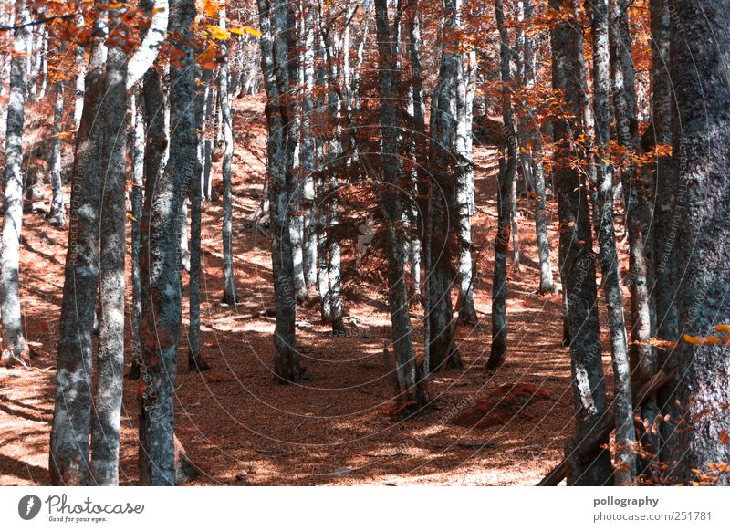 Nature Tree Red Leaf Forest Life Autumn Environment Landscape Wood Earth Beginning Change Transience Hill Branch