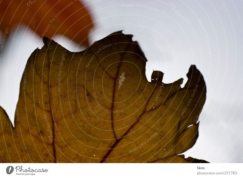 Batman vs. ... Environment Nature Plant Leaf Brown Willpower Autumn Fight Structures and shapes Colour photo Deserted Copy Space right Copy Space top