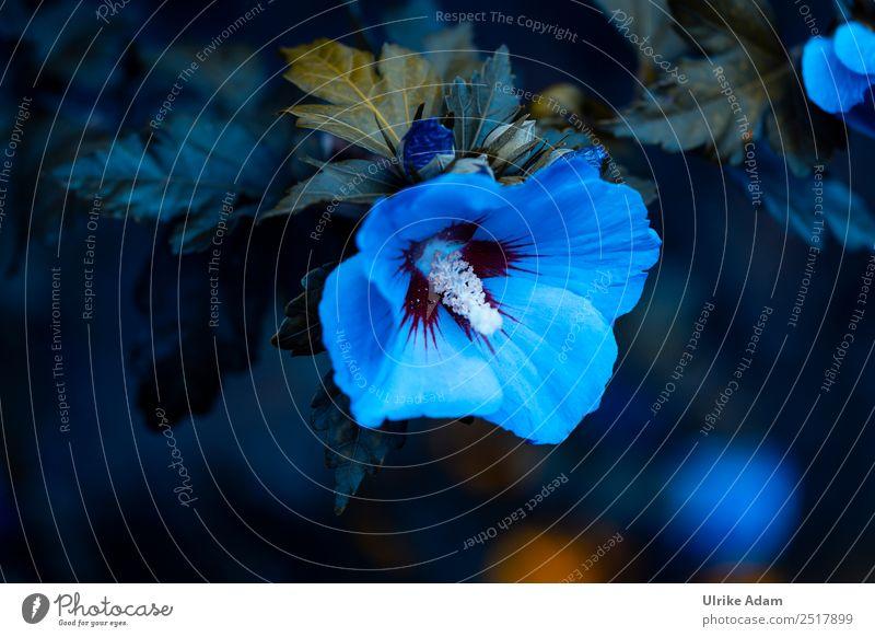 Nature Summer Plant Blue Flower Calm Dark Autumn Blossom Sadness Garden Design Park Decoration Elegant Grief