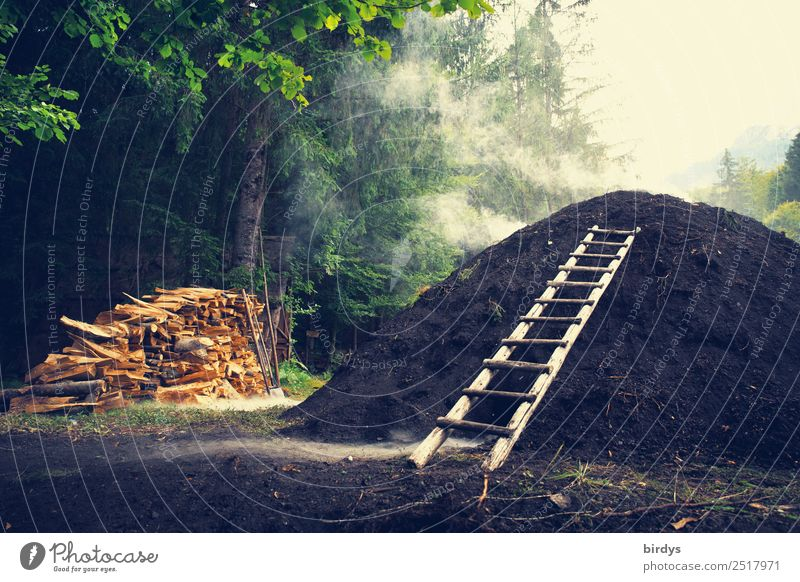Charcoal pile in the forest   old professions, charcoal burners Craftsperson Charcoal burner Workplace Craft (trade) Nature Earth Summer Tree Forest Ladder