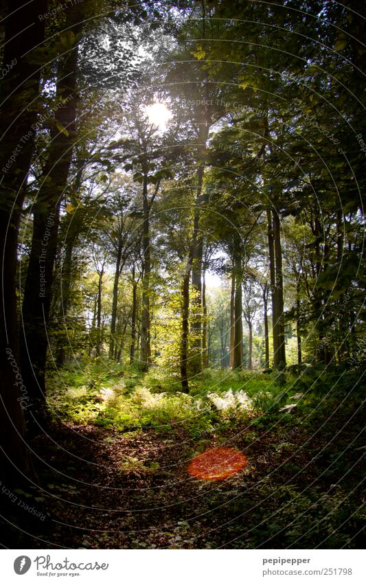 transparency Leisure and hobbies Hunting Summer Landscape Plant Tree Moss Forest Wood Breathe Green Calm Loneliness Lanes & trails Colour photo Exterior shot