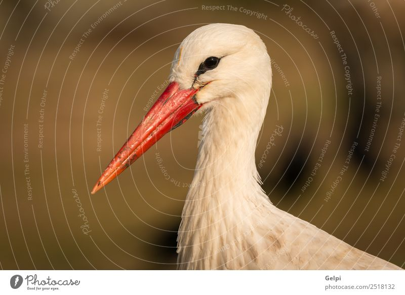 Natural profile of a elegant stork in the field Elegant Beautiful Freedom Family & Relations Couple Adults Nature Animal Wind Grass Bird Flying Long Wild Blue