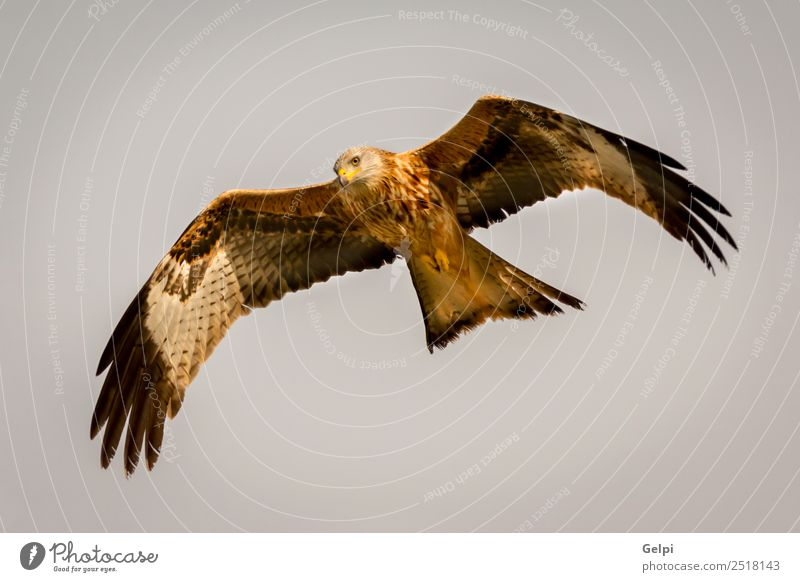 Awesome bird of prey in flight Sky Nature Blue White Animal Bird Flying Wild Gold Feather Speed Wing Spain Story Beak Wilderness