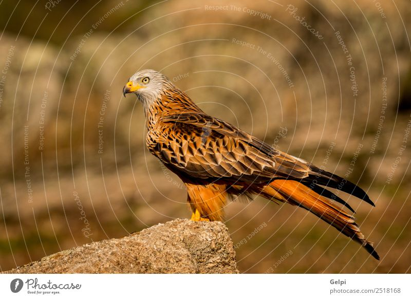 Awesome bird in the field with a beautiful plumage Elegant Beautiful Freedom Nature Animal Grass Bird Wing Cute Wild Green White Colour Feather kite Beak sunny