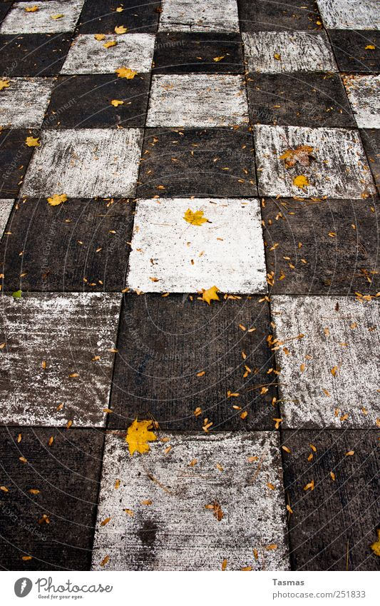Old Leaf Loneliness Autumn Playing Wood Park Weather Leisure and hobbies Esthetic Simple Autumn leaves Sharp-edged Autumnal Bad weather Chess
