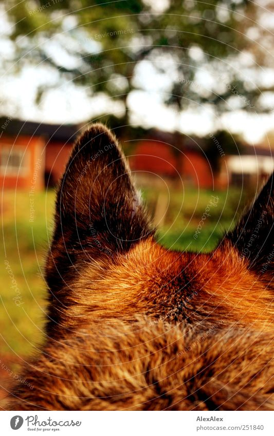 Sky Green Tree Plant Joy Animal Environment Landscape Garden Grass Dog Stone Brown Ear Observe Idyll