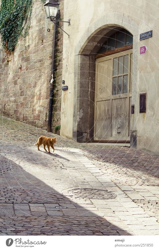 Turmgasse with Büsi Village House (Residential Structure) Wall (barrier) Wall (building) Pet Cat 1 Animal Going Cobblestones Paving stone Alley Morning