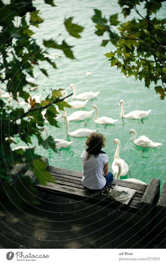Human being Nature Water Tree Animal Adults Lake Back Wild animal Group of animals Observe Lakeside To enjoy Swan Crouch Bird's-eye view