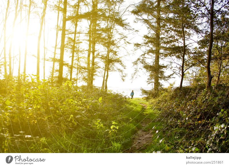 Human being Sky Nature Water Tree Plant Sun Summer Vacation & Travel Animal Far-off places Forest Freedom Environment Landscape Grass