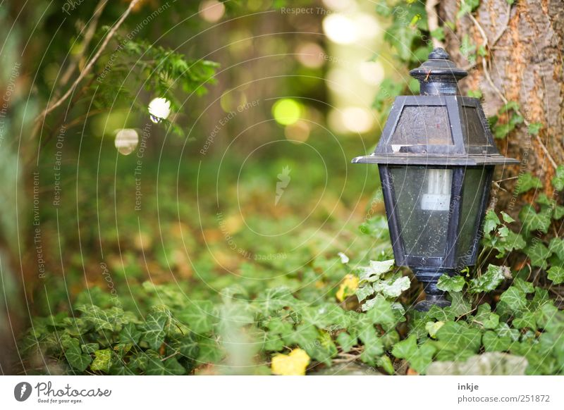 Nature Old Green Tree Black Autumn Death Wood Garden Metal Lamp Park Glass Dirty Bushes Grief
