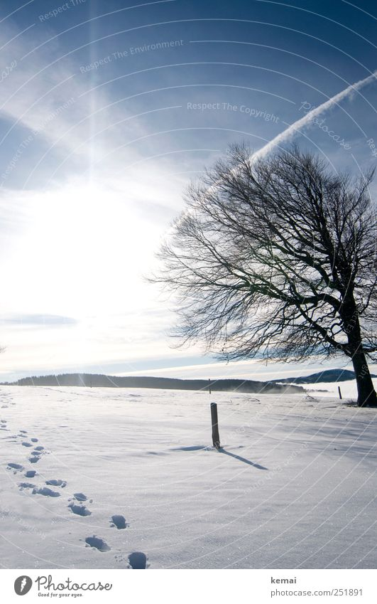 Sky Nature Blue White Tree Plant Sun Clouds Winter Cold Snow Environment Landscape Bright Ice Frost