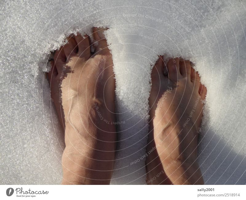 cool down... Feet 1 Human being Elements Winter Ice Frost Snow Relaxation Freeze Stand Cold White Brave Self Control Unwavering Refrigeration Toes Colour photo