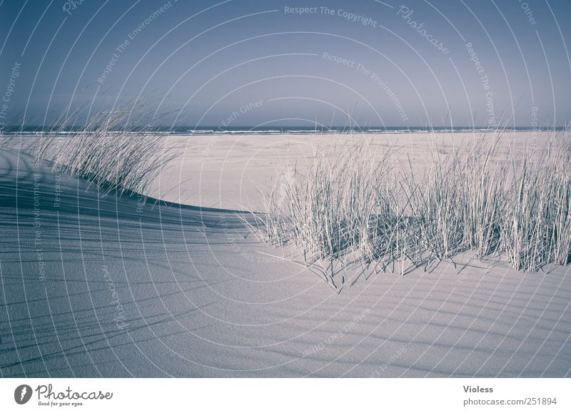 Beach Relaxation Landscape Sand Island North Sea To enjoy Marram grass
