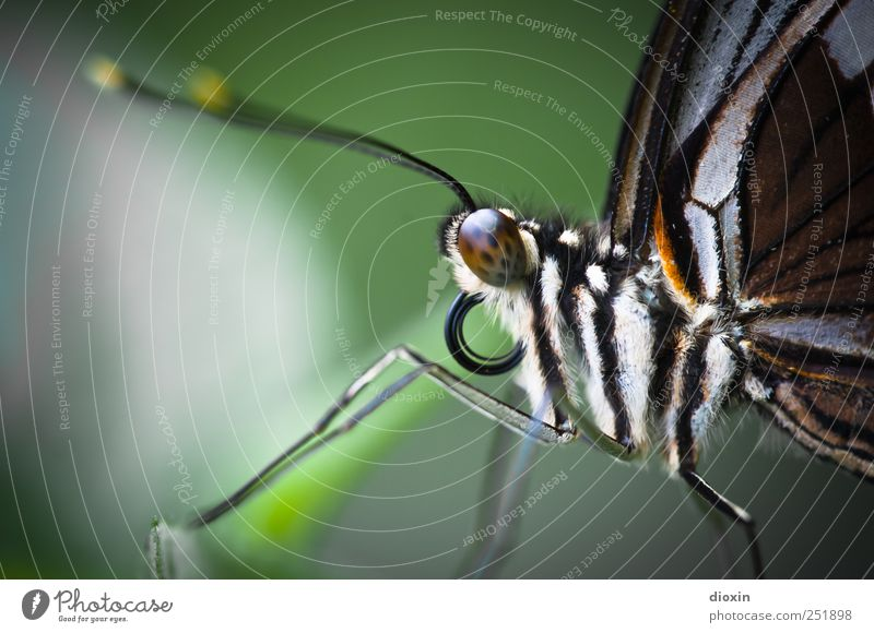 you´re my butterfly Animal Butterfly Animal face Wing Pelt Zoo butterfly's trunk Feeler Compound eye Legs 1 Looking Sit Cuddly Small Natural Nature Delicate