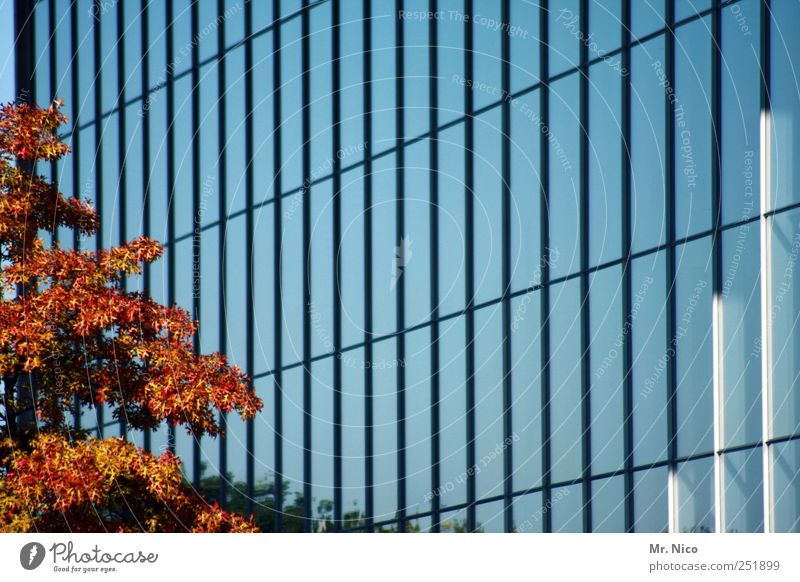 Tree Leaf Environment Architecture Autumn Building Facade Living or residing Growth Modern Glass High-rise Beautiful weather Might Manmade structures