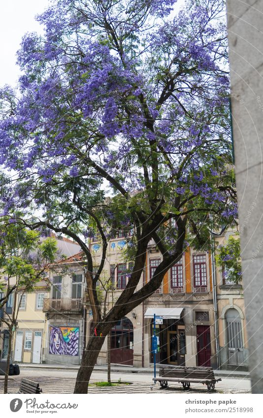 Blossoming Old Town Vacation & Travel City trip Tree Porto Portugal Downtown Old town Deserted House (Residential Structure) Wall (barrier) Wall (building)