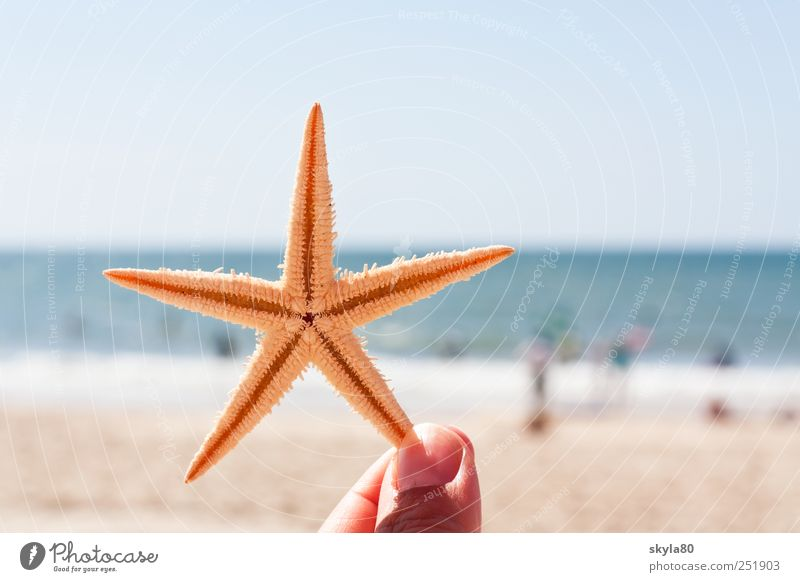 holiday greetings Vacation & Travel Summer Beach Ocean Starfish Relaxation Fingers To hold on Marine animal Star (Symbol) Summer vacation Beach vacation Thorny