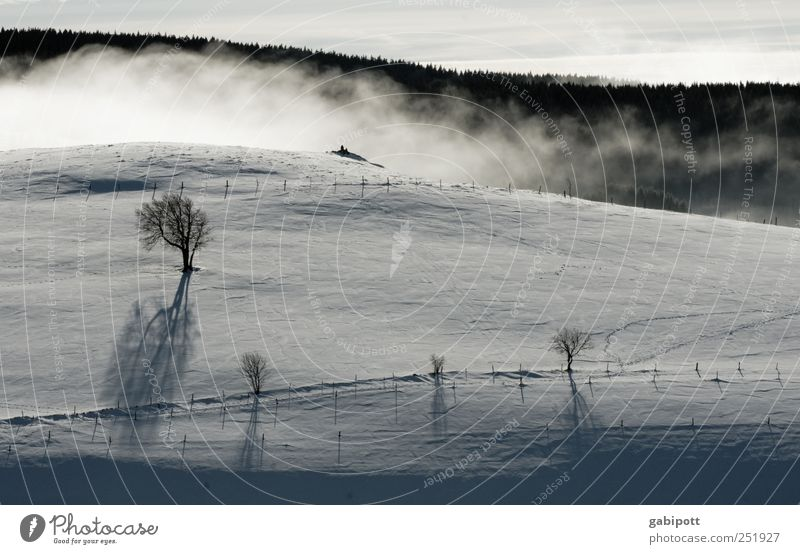 Winter Landscape II Vacation & Travel Tourism Far-off places Snow Winter vacation Mountain Nature Beautiful weather Fog Tree Hill Free Fresh Cold Black White