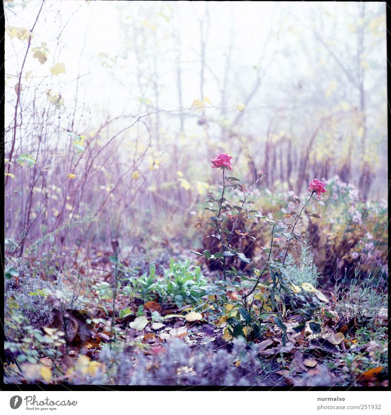 Nature Plant Flower Leaf Animal Relaxation Autumn Environment Garden Happy Dream Moody Art Leisure and hobbies Fog Esthetic
