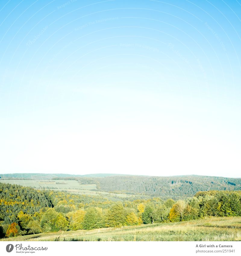 The Rhön is so beautiful! Environment Nature Landscape Plant Sky Cloudless sky Sunlight Autumn Weather Beautiful weather Tree Bushes Leaf Indian Summer Field