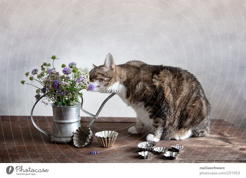 Still life with the cat baking tin Plant Flower Blossom Wild plant Animal Pet Cat 1 Watering can Vase Containers and vessels Wood Metal Observe Fragrance