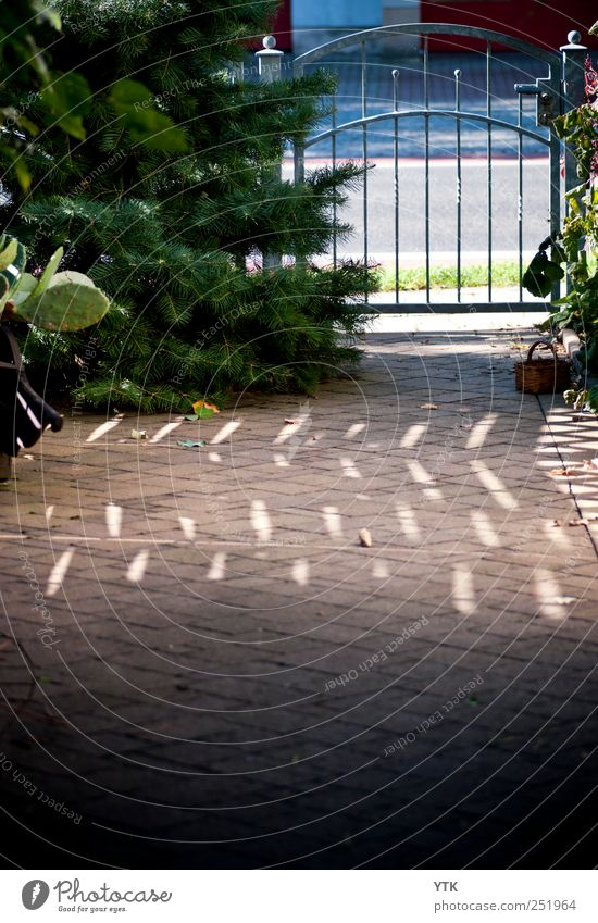 Nature Tree Plant Sun House (Residential Structure) Street Dark Environment Emotions Safety Metalware Warm-heartedness Protection Gate Fence Beautiful weather