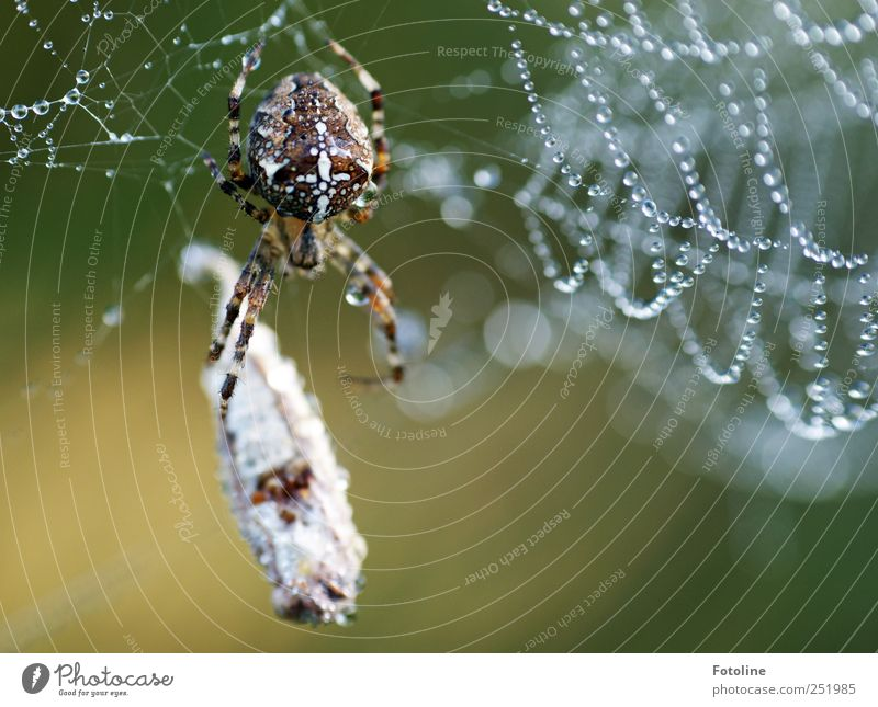 'In' champagne breakfast Environment Nature Animal Elements Water Drops of water Wild animal Spider Catch Wet Natural Cross spider To feed Prey Colour photo